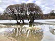 Árvores da mola sem folhas, refletidas na água imagem de stock