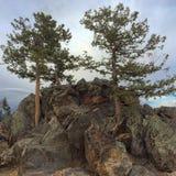 Árvores da montanha Imagem de Stock