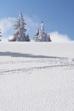 Árvores da montanha da neve Fotografia de Stock