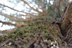 Árvores da montanha da rocha e da árvore das montanhas fotos de stock royalty free