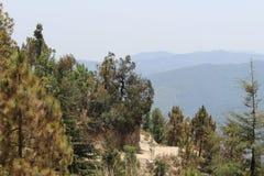 Árvores da montanha da rocha e da árvore das montanhas fotografia de stock royalty free