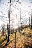 Árvores da montanha de encontro ao céu que gira tormentoso Foto de Stock