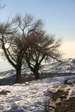 Árvores da montanha do inverno Imagem de Stock Royalty Free