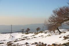 Árvores da montanha do inverno Fotos de Stock