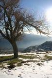 Árvores da montanha do inverno Fotografia de Stock Royalty Free