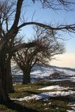Árvores da montanha do inverno Fotos de Stock Royalty Free