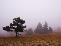 Árvores da montanha na névoa imagens de stock