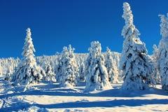 Árvores da montanha nos vestidos da neve Foto de Stock