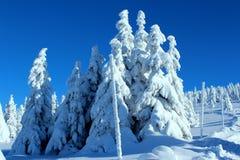 Árvores da montanha nos vestidos da neve Imagem de Stock