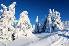 Árvores da montanha nos vestidos da neve Fotos de Stock