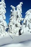 Árvores da montanha nos vestidos da neve Imagens de Stock Royalty Free