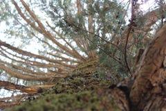 Árvores da montanha da rocha e da árvore das montanhas imagem de stock royalty free
