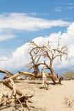 Árvores da morte no parque nacional de Vale da Morte Fotografia de Stock