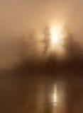 Árvores da névoa da luz solar Imagens de Stock Royalty Free