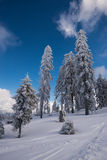 Árvores da neve fotografia de stock