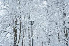 Árvores da neve Imagem de Stock Royalty Free