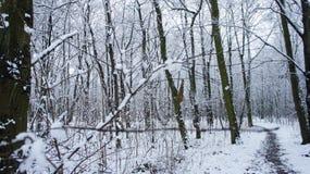 Árvores da neve do inverno, perspectiva da estrada do parque, fileiras brancas da árvore da aleia imagens de stock royalty free