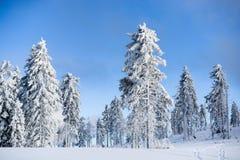 Árvores da neve na montanha imagens de stock royalty free