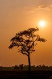 Árvores da noite do por do sol Fotografia de Stock Royalty Free