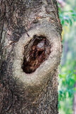 Árvores da paisagem Imagem de Stock