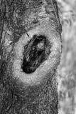 Árvores da paisagem Imagens de Stock Royalty Free