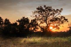 Árvores da paisagem com céu e nuvens Fotografia de Stock Royalty Free