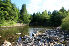 Árvores da paisagem e um rio Imagem de Stock