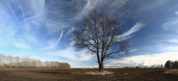 Árvores da paisagem no campo Imagem de Stock
