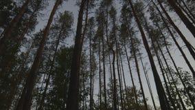 Árvores da paisagem no slider video estoque