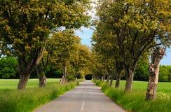 Árvores da passagem do asfalto da estrada Imagens de Stock Royalty Free
