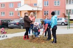 Árvores da planta dos residentes na jarda Fotografia de Stock Royalty Free