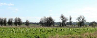 Árvores da queda foto de stock