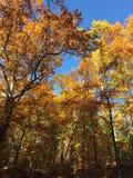 Árvores 2 da queda Fotos de Stock