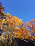 Árvores da queda Foto de Stock Royalty Free