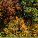 Árvores da queda fotografia de stock