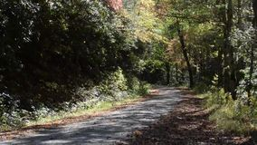 Árvores da queda com folhas do fallin video estoque