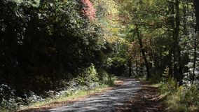 Árvores da queda com queda das folhas vídeos de arquivo