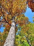 Árvores da queda do outono foto de stock