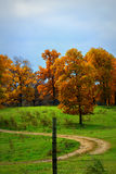 Árvores da queda em um monte Fotos de Stock Royalty Free