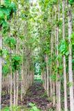 Árvores da rua fotos de stock