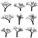 Árvores da silhueta