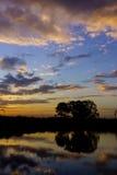 Árvores da silhueta com reflexão Imagens de Stock
