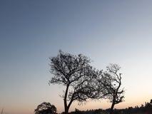 Árvores da sobrevivência imagens de stock royalty free
