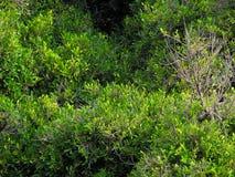 Árvores da tarde imagens de stock royalty free