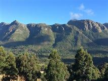 Árvores da vista da montanha no primeiro plano Foto de Stock