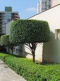 Árvores dadas forma redondas Foto de Stock Royalty Free