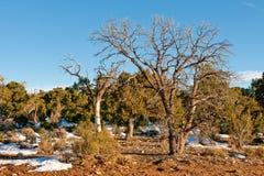 Árvores danificadas incêndio na madeira Imagem de Stock Royalty Free