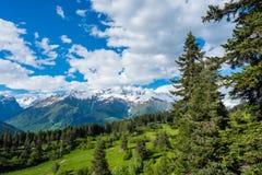 Árvores das coníferas e céu azul nas montanhas Imagens de Stock
