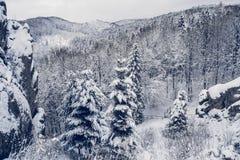 Árvores das montanhas cobertas com a neve As árvores são congeladas Para o fundo foto de stock