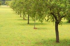 Árvores de amêndoa Foto de Stock Royalty Free